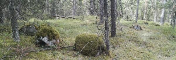 Peskallio1.jpg