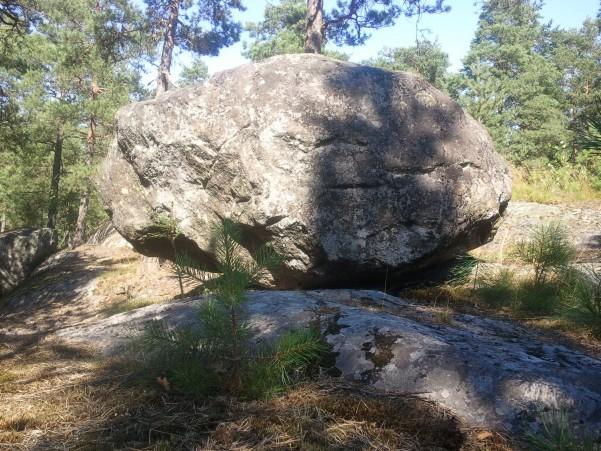 kivi1.jpg