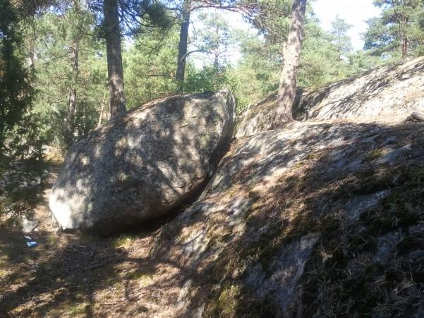 kivi2.jpg