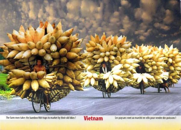 turnipsi.jpg